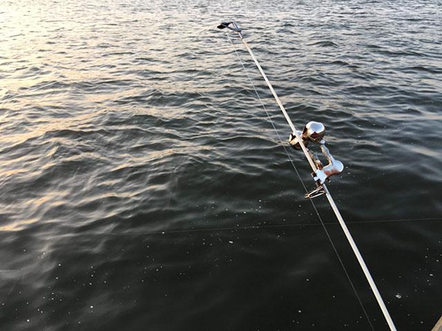 シーズン うなぎ 釣り